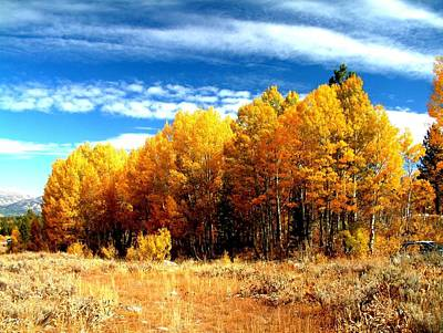 Hope Valley Aspens Art Print by Michael Courtney
