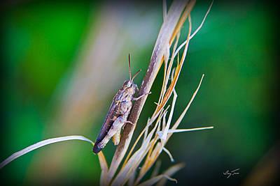 Photograph - Hopper by Barry Jones