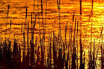 Willow Lake Photograph - Horicon Cattail Marsh Wisconsin by Steve Gadomski
