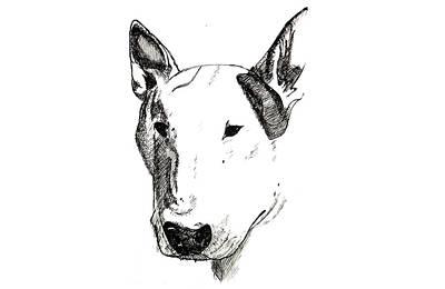 Pitbull Drawing - Horizontal Athos by JF Mondello