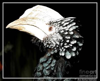 Animals Photograph - Hornbill Bird by Rose Santuci-Sofranko