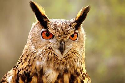 Horned Owl Art Print by Brent K. Moore \ SeeMidTN.com