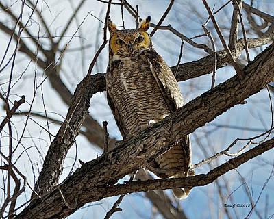 Horned Owl In Tree Art Print by Stephen  Johnson