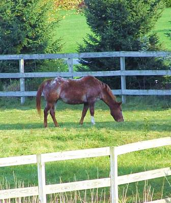 Photograph - Horse-18 by Todd Sherlock
