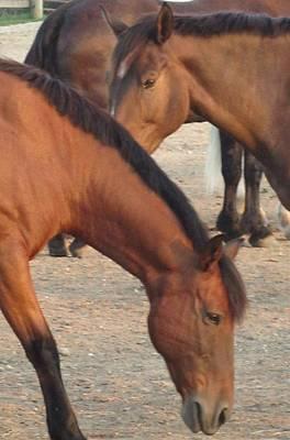 Photograph - Horse-32 by Todd Sherlock