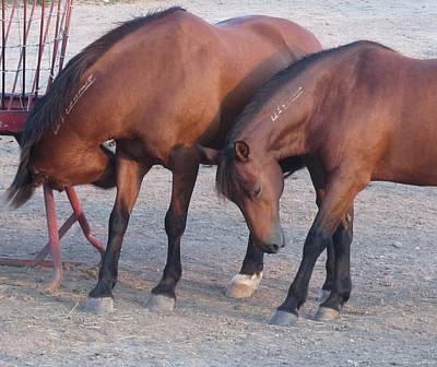 Photograph - Horse-34 by Todd Sherlock