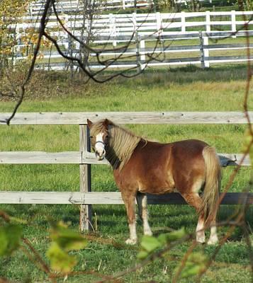 Photograph - Horse-5 by Todd Sherlock