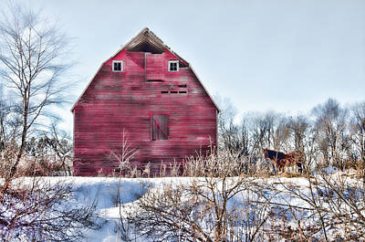 Photograph - Horse And Barn by Whispering Feather Gallery