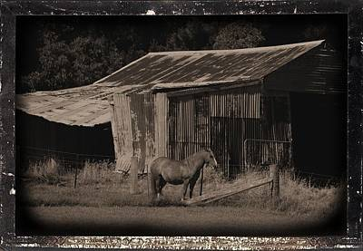 Photograph - Horse And Old Barn by Fran Woods