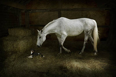 Horse And Puppy In Stable Art Print