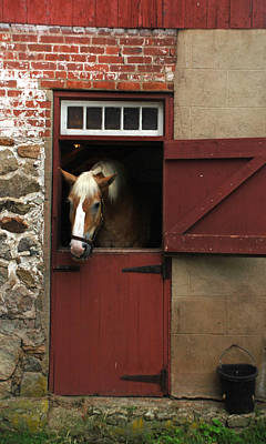 Photograph - Horse And Stable by Richard Bryce and Family