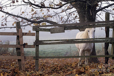 Horse At Fence Art Print by Jim Corwin and Photo Researchers