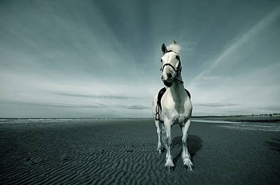 Horse At Irvine Beach Art Print by Mikeimages