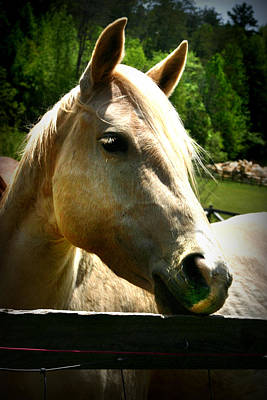 Photograph - Horse At The Fence by Kelly Hazel