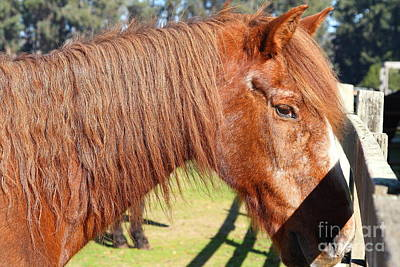 Horse At The Ranch . 7d9756 Art Print