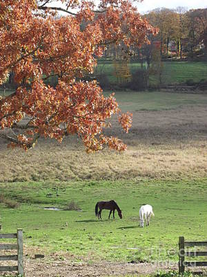 Photograph - Horse Barn Hill Pasture by Michelle Welles