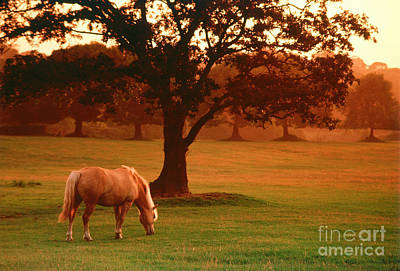Horse Art Print by Carl Purcell and Photo Researchers