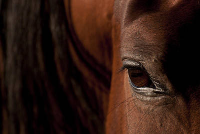 Photograph - Horse Eye by Michael Mogensen