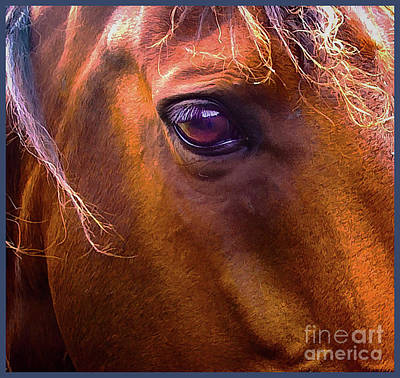 Photograph - Horse Eyes by James  Dierker