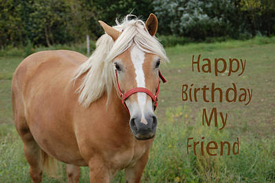 Horse Photograph - Horse Friend Birthday by Aimee L Maher Photography and Art Visit ALMGallerydotcom