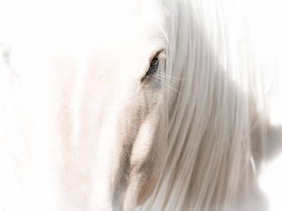 Horse Glow Art Print by Toni Thomas