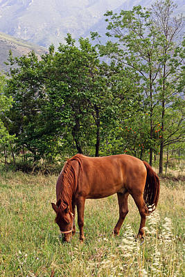 Y120817 Photograph - Horse Grazing by Maria Jose Valle Fotografia
