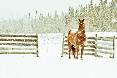 Working Animals Photograph - Horse In A Snowstorm by Roberta Murray - Uncommon Depth