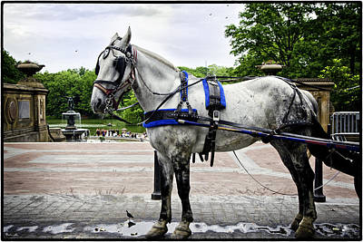 Bethesda Fountain Photograph - Horse In Central Park by Madeline Ellis