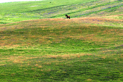 Photograph - Horse On The Meadow by Emanuel Tanjala