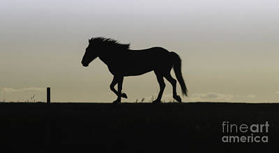 Photograph - Horse On The Ridge by Michael Canning