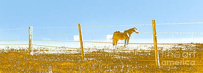 Photograph - Horse Pasture Revblue by Paulette B Wright