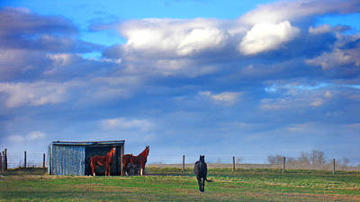 Photograph - Horse Ranch Landscape by Steve Karol