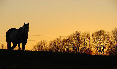 Chestnut Dun Horse Photograph - Horse Sunset by Brian Stevens