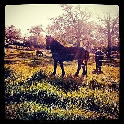 #horse #sunshine #silhouette #sunrise Art Print by Bryan P