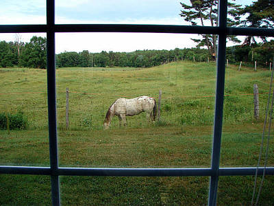 Mixed Media - Horse Through The Kitchen Window by Bruce Ritchie
