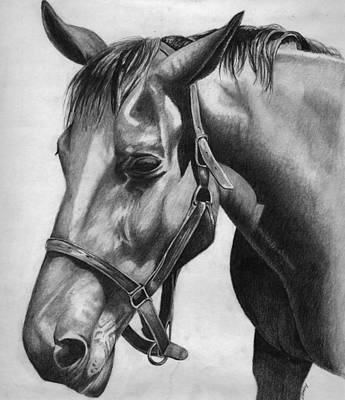 Animals Drawings - Horse by Vic Ritchey