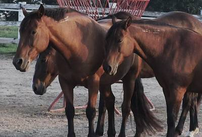 Photograph - Horses-28 by Todd Sherlock