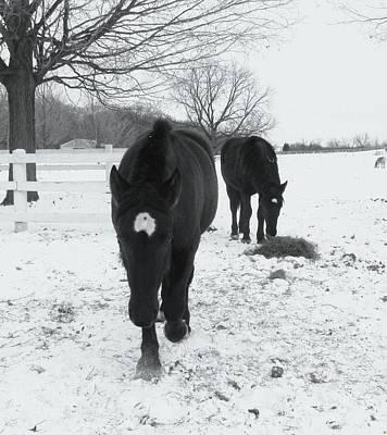 Photograph - Horses-8 by Todd Sherlock