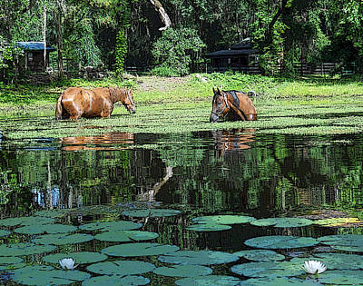 Horses And Water Lillies Original