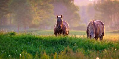 Photograph - Horses At Sunset  by Emmanuel Panagiotakis