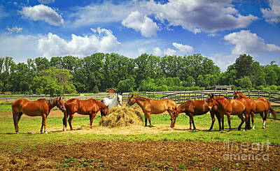 Animals Royalty-Free and Rights-Managed Images - Horses at the ranch by Elena Elisseeva