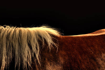 Horses Back Art Print by Gary Smith