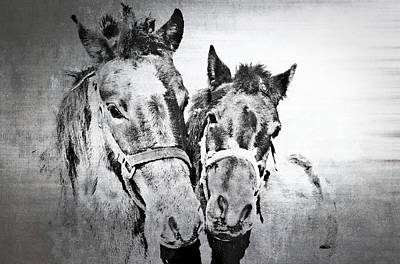 Horses By The Road Art Print by Kathy Jennings
