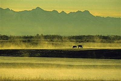 Natural Forces Photograph - Horses Graze In Morning Mist On A River by Gordon Wiltsie