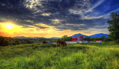 Photograph - Horses Grazing At Sunset by Steve Hurt