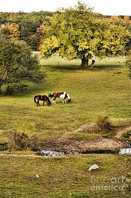 Horse Pasture Photograph - Horses by HD Connelly