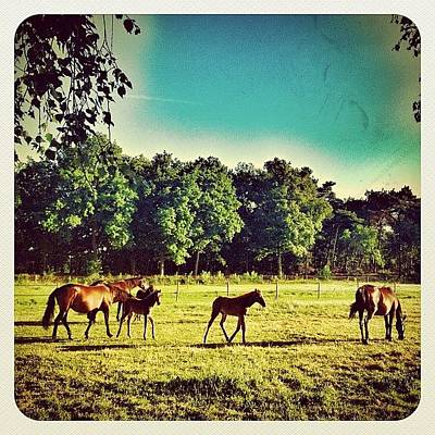 Dutch Photograph - #horses In The Morning by Wilbert Claessens