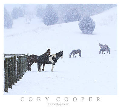 Photograph - Horses In The Snow by Coby Cooper
