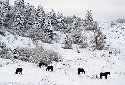 Horses In The Snow Art Print
