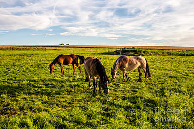 Photograph - Horses In The Sunset by Bodo Herold